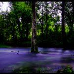 """""""L'arbre de la rivière"""""""